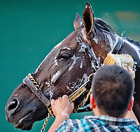 BALTIMORE, MD - MAY 17: Always Dreaming gets a bath after exercising in preparation for the Preakness Stakes this Saturday at Pimlico Race Course on May 17, 2017 in Baltimore, Maryland.(Photo by Scott Serio/Eclipse Sportswire/Getty Images)