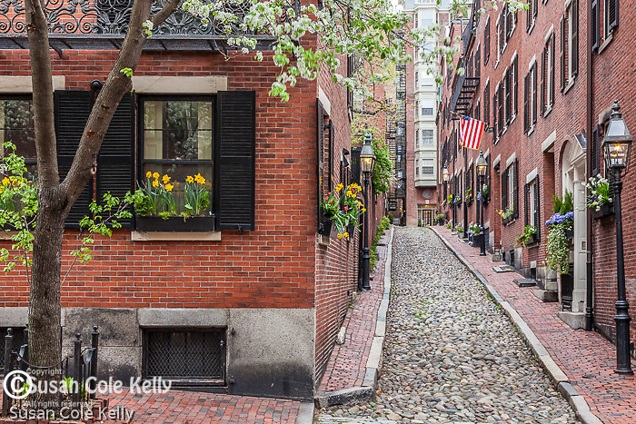 Spring blossoms on Beacon Hill, Boston, MA, USA