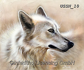 Sandi, REALISTIC ANIMALS, REALISTISCHE TIERE, ANIMALES REALISTICOS, paintings+++++,USSN10,#a#, EVERYDAY ,wolf,wolves ,puzzles