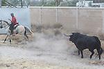 "The bull and the horses during the Tournament of ""toro de la vega"" at Tordesillas, in Valladolid. Sapin. September 13, 2016. (ALTERPHOTOS/Rodrigo Jimenez)"