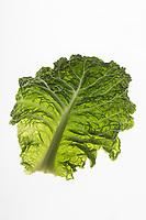 Gastronomie Générale/ Chou vert // Cabbage