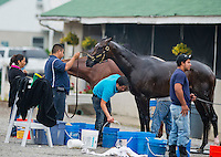 Charming Kitten, trained by Todd Pletcher, gets a bath after working out in preparation for the Kentucky Derby at Churchill Downs on April 29, 2013.