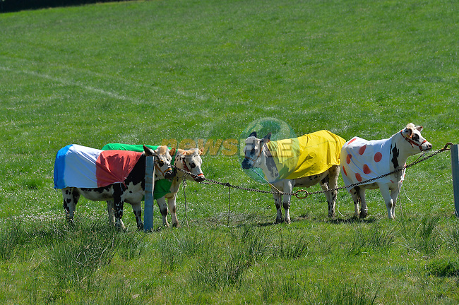 Colourful cows during Stage 7 of the 2015 Tour de France running 190.5km from Livarot to Fougeres, France. 10th July 2015.<br /> Photo: ASO/B.Bade/Newsfile
