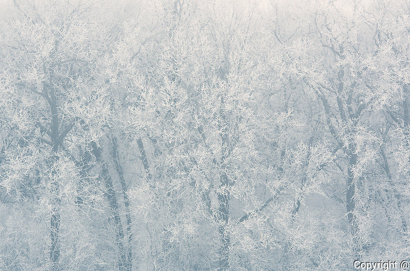 Hoarfrost on trees<br />La Barriere Provincial Park<br />Manitoba<br />Canada