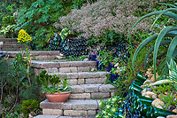 Stone paver steps in hillside garden with whimsical blue bottles embedded into hillside by Crassula multicava, Jim Bishop and Scott Borden garden