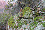 Rock with moss and algae
