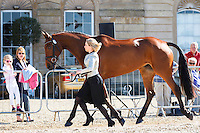 NZL-Megan Heath (ST DANIEL) FIRST HORSE INSPECTION: 2016 GBR-Mitsubishi Motors Badminton Horse Trials CCI4* (Wednesday 4 May) CREDIT: Libby Law COPYRIGHT: LIBBY LAW PHOTOGRAPHY