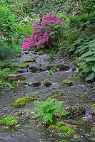 ORPTC_D119 - USA, Oregon, Portland, Crystal Springs Rhododendron Garden, Azalea in bloom along small creek.