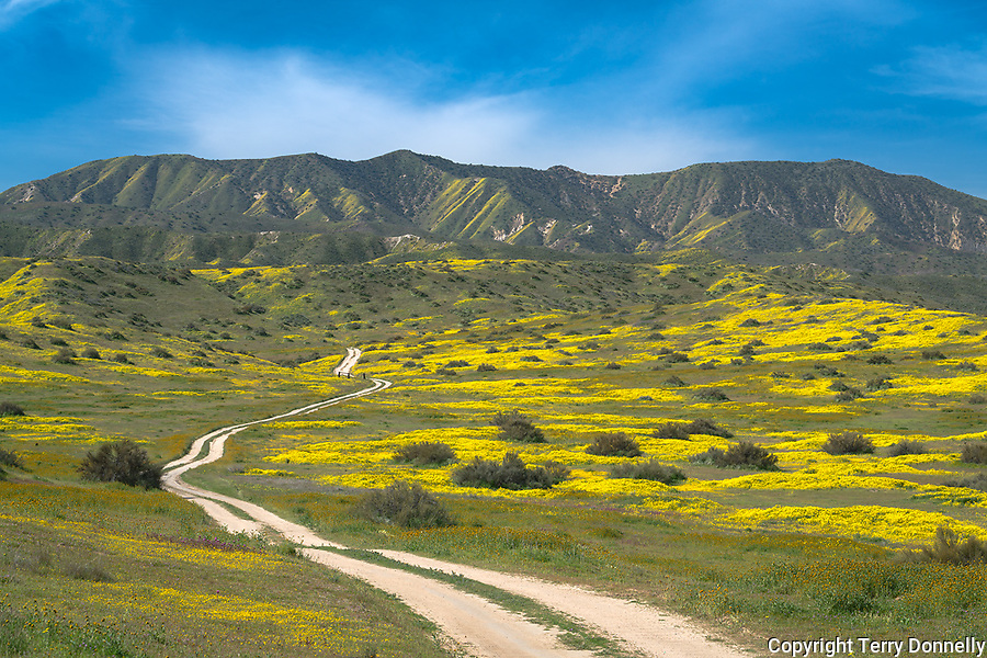 Carrizo Plain National Monument, California:<br /> road leading through a valley of yellow and green spring colors beneath the Caliente range