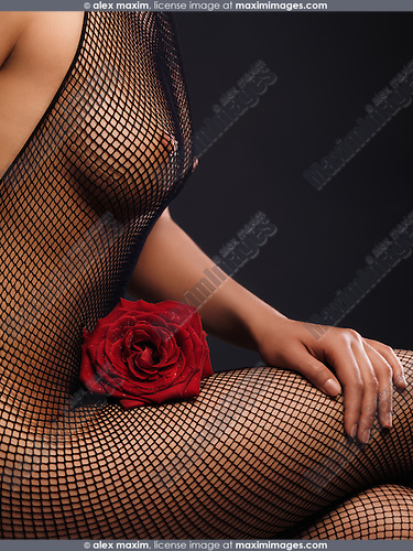 Closeup of a woman body in a sheer fishnet bodystocking sitting with a red rose