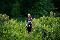 A woman jogs in central park, New York.  06/05/2015. Eduardo MunozAlvarez/VIEWpress