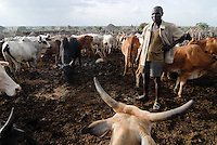 "Afrika Uganda Karamoja , Volk der Karimojong , Hirten mit Herde im Kral zum Schutz vor Viehdiebstahl -  Nomaden Halbnomaden ethnische Gruppe Afrikaner Indigene Voelker afrikanisch xagndaz | .Africa Uganda Karamoja , Karimojong a pastoral tribe , shephard with livestock in kral to protect the cattle against cattle raids by hostile warriors -  indigenous people  .| [ copyright (c) Joerg Boethling / agenda , Veroeffentlichung nur gegen Honorar und Belegexemplar an / publication only with royalties and copy to:  agenda PG   Rothestr. 66   Germany D-22765 Hamburg   ph. ++49 40 391 907 14   e-mail: boethling@agenda-fototext.de   www.agenda-fototext.de   Bank: Hamburger Sparkasse  BLZ 200 505 50  Kto. 1281 120 178   IBAN: DE96 2005 0550 1281 1201 78   BIC: ""HASPDEHH"" ,  WEITERE MOTIVE ZU DIESEM THEMA SIND VORHANDEN!! MORE PICTURES ON THIS SUBJECT AVAILABLE!! ] [#0,26,121#]"