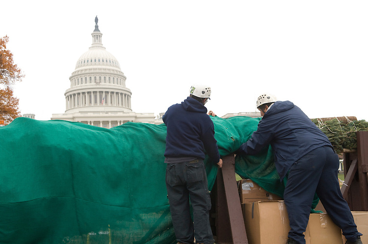 This year's Capitol Christmas Tree is a gift from the people of Vermont. This is actually the fifth time that Vermont has provided a tree to Washington, DC. Past years where 1967, 1980, 1982, 1994 and 2007. The tree is a balsam fir coming from the Green Mountain National Forest. The Green Mountain National Forest is celebrating their 75th anniversary in 2007. Approximately 7,500 ornaments will be provided for the Capitol Tree and with the 70 companion trees. The Lighting Ceremony will be December 5th, 2007, by the Speaker of the House Nancy Pelosi.