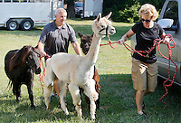 NWA Democrat-Gazette/DAVID GOTTSCHALK  Doug and Kim Sullivan lead a miniature pony and two alpacas to the Washington County 4-H Petting Zoo on the Washington County Fair Grounds in Fayetteville Tuesday, September 1, 2015. The Washington County Fair runs through September 5.