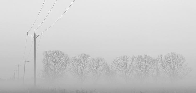 Poles &amp; Trees<br /> Horsham, Victoria