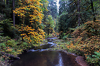 Silver Creek during the Autumn at Silver Falls State Park in Oregon, USA.