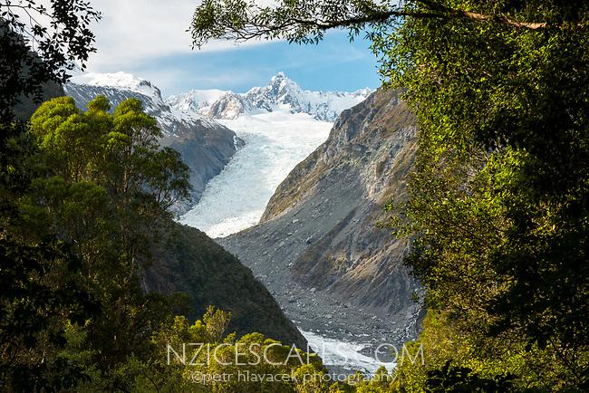 Fox Glacier in winter seen through rainforest, Westland Tai Poutini National Park, UNESCO World Heritage Area, West Coast, New Zealand, NZ