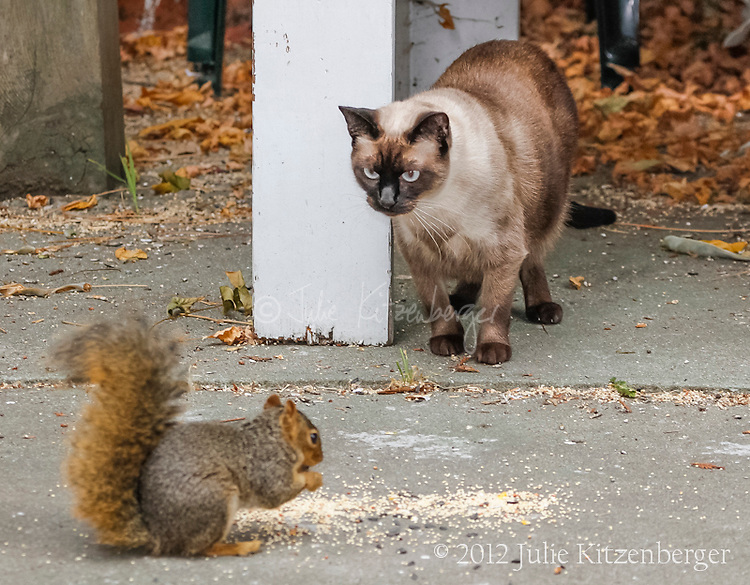 2012-08-31_Coco-Squirrel-other stuff