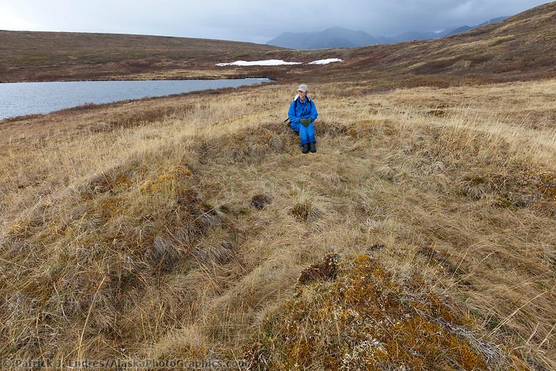 Depressions from subterranean homes of the Arctic indigenous peoples, dating perhaps 5000 years, Etivluk lake, National Petroleum Reserve, Alaska.