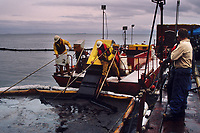 Exxon Valdez Oil Spill Clean up. French Egmopol skimmer laps up floating oil washed off Point Helen beach, Knight Island, August 1989, Prince William Sound, Alaska