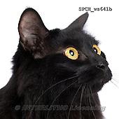 Xavier, ANIMALS, REALISTISCHE TIERE, ANIMALES REALISTICOS, FONDLESS, photos+++++,SPCHWS641B,#A#