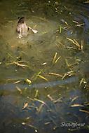 Image Ref: YR126<br /> Location: Healesville Sanctuary, Healesville<br /> Date: 29.01.17
