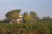 Vineyard. And house, Chateau Le Pin. Pomerol, Bordeaux, France