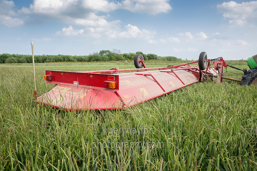 Using a CTM Weed Surfer to top black grass in winter wheat - Lincolnshire, June