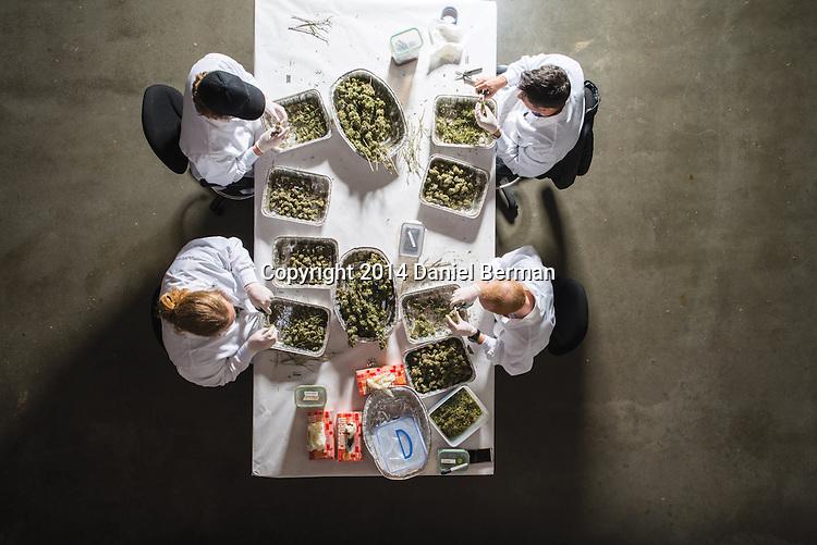Marijuana weed pot Cannabis medical marijuana smokers users patients growers stoners