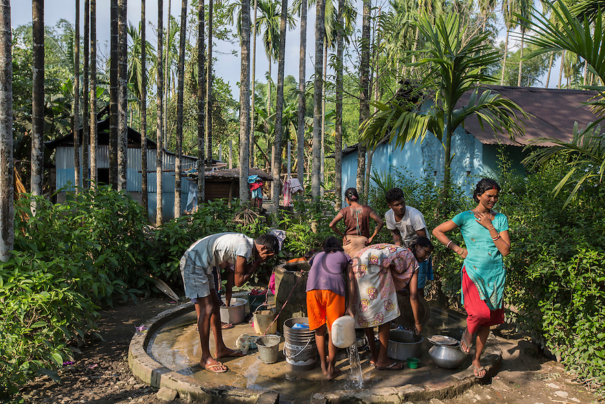 India – West Bengal: Villagers collecting water from a well in Pakka Line, one of the villages dotting the Mogulkata Tea Estate, in the Dooars region. The only tap water installed in the area serves 500 inhabitants and is constantly full of people, making it impossible to collect drinking water there. Workers are therefore forced to drink from open, smelly wells covered with dead leaves and dirt everytime it gets rainy or windy.