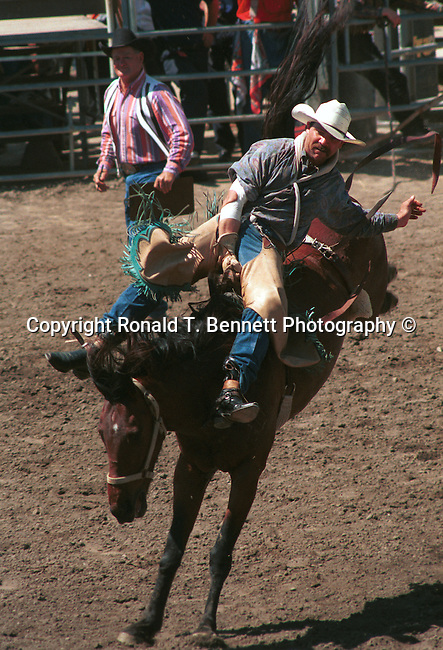 "Cowboy on a wild mustang  ""rough stock"" saddle bronc riding a bronco Arizona, untrained horse, habitually bucks, feral horse, wild horse, bronco has unpredictable behavior, a feral horse, modern rodeo, rodeo, bareback bronc riding, saddle bronc riding, mustangs, buckaroo, domesticated horses, bred for bucking, State of Arizona, Southwest, desert, 48th State, Last of contiguous states, Phoenix, Scottsdale, Grand Canyon, Indian reservations, four corners, desert landscape,  western United States, Southwest, Mountains, plateaus, ponderosa pines, Colorado River,  Mountain lion, Navajo Nation, No daylight savings time, Arizona Territory, Arizona, AR, Ariz,"