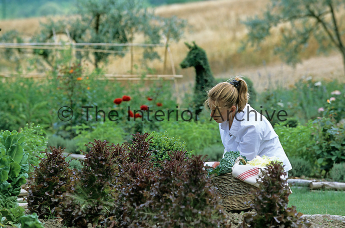 Picking fresh herbs and vegetables for the evening meal