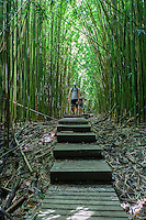 A couple hiking in a thick bamboo forest along the Pipiwai hiking trail, Haleakala National Park, Kipahulu, Maui