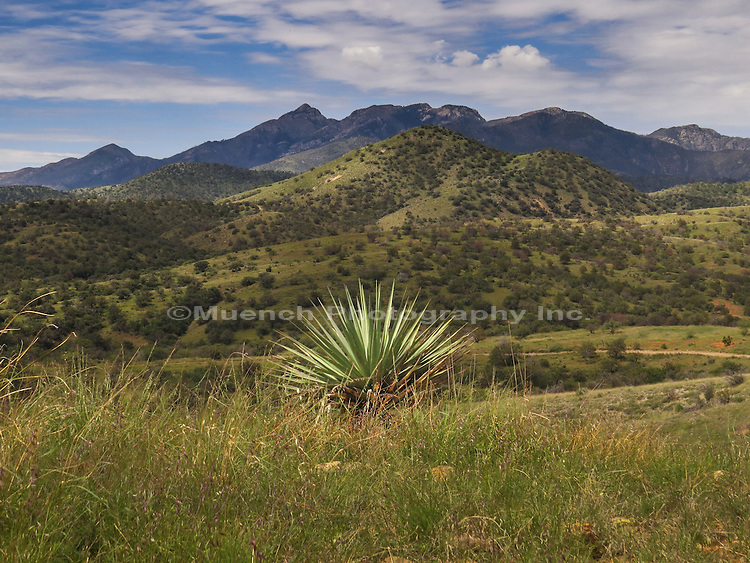 Santa Rita Mountains in Arizona.