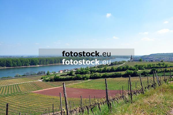 Blick &uuml;ber die Weinbergslage &quot;Roter Hang&quot; (Bereich Nierstein, Anbaugebiet Rheinhessen) auf Nierstein und den Rhein<br /> <br /> view over &quot;Roter Hang&quot; to Nierstein at the river Rhine