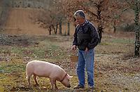 """Europe/France/Midi-Pyrénées/46/Lot/Causse de Limogne/Lalbenque: Mr Raymond Boisset et son cochon truffier """"Kiki"""" lors d'un cavage - AUTORISATION N°255"""