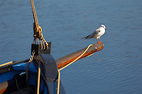Tern sitting on the front of an old Seine Fishing boat -  Honfleur harbour, Normandy, France.