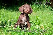 Marek, ANIMALS, REALISTISCHE TIERE, ANIMALES REALISTICOS, dogs, photos+++++,PLMP3222,#a#, EVERYDAY