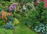 Vashon-Maury Island, WA: Summer perennial garden featuring lilies, clematis, hostas, Japanese forest grass and hydrangeas