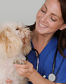 Female veterinarian stock photo