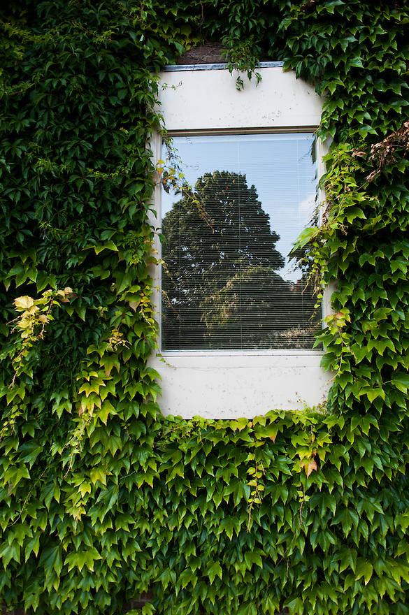 Nederland, Kapelle, 25 juni 2010.Raam met spiegeling van boom en klimop..Foto (c)  Michiel Wijnbergh