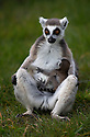 13/04/16 <br />