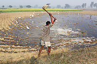 A farmer works his farmland on the outskirts of the city of Kanpur. The city is notorious for having some of the country's worst water pollution which is created by the local leathery tannery industry. Waste water laced with toxins, such as chromium, is discharged into local waterways which are used by farmers who live in the nearby area. An array of health problems now afflict locals including cancers, mental health problems, child development issues and skin diseases.