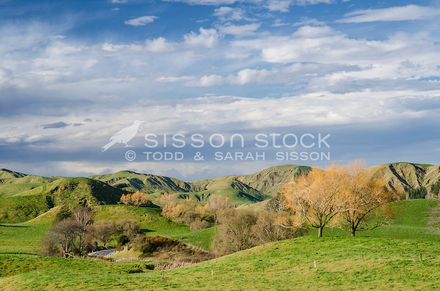 Green paddocks & foot hills between Napier and Gisborne.  North Island New Zealand.