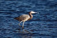 January 08, 2011.  Merritt Island Wildlife Refuge in Merritt Island, Florida.