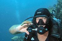 Tasselled Wabbegong Shark Eucrossorhinus dasypogon Juvenile & Diver, Raja Ampat, Indonesia