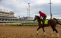LOUISVILLE, KENTUCKY - MAY 03: State of Honor, owned by Conrad Farms and trained by Mark E. Casse, exercises in preparation for the Kentucky Derby at Churchill Downs on May 3, 2017 in Louisville, Kentucky. (Photo by Jon Durr/Eclipse Sportswire/Getty Images)