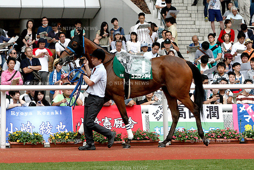 Kokorono Ai,<br /> JUNE 12, 2016 - Horse Racing :<br /> Kokorono Ai is led through the paddock before the Mermaid Stakes at Hanshin Racecourse in Hyogo, Japan. (Photo by Eiichi Yamane/AFLO)
