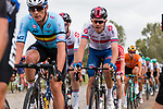 Yves Lampaert (BEL) and Luke Rowe (WAL) in action during the Elite Men's Road Race during the 2019 UEC European Road Championships, Alkmaar, The Netherlands, 11 August 2019.<br /> <br /> Photo by Thomas van Bracht / PelotonPhotos.com | All photos usage must carry mandatory copyright credit (Peloton Photos | Thomas van Bracht)