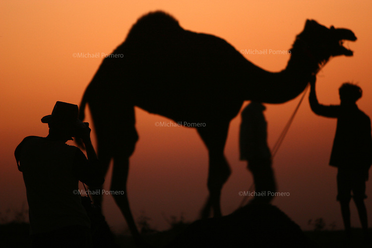 08.11.2008 Pushkar(Rajasthan)<br /> <br /> Photographer taking a picture of a camel and his owner in the camel camp.<br /> <br /> Photographe prenant en photo un chameau et son proprietaire sur le camp.